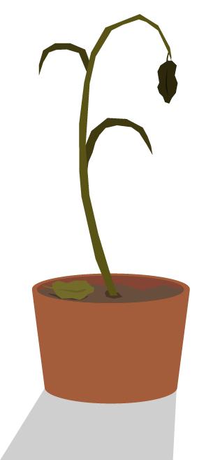 Død plante