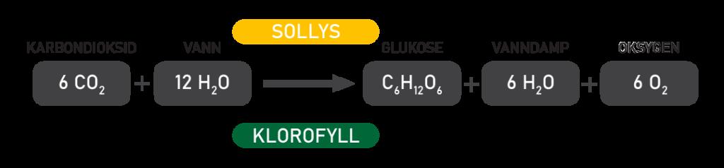 Prosessen under fotosyntesen.