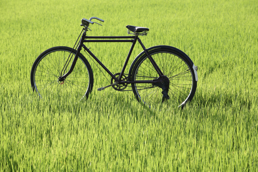 classic bicycle in paddy field.