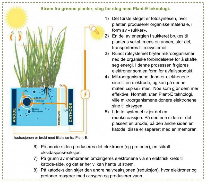 Steg for steg med Plant-E teknologi